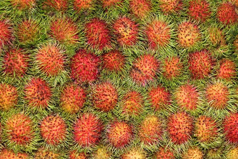 Egzota Sapindaceae zdjęcia royalty free