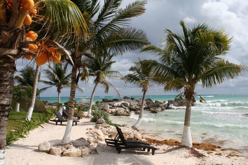 egzotyczna Africa wyspa Mauritius obraz royalty free
