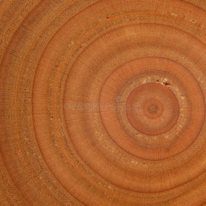 Egzotyczna drewniana tekstura obrazy royalty free