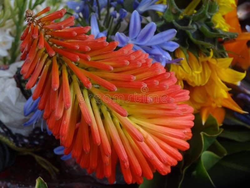 Egzotyczna kombinacja kwiaty w Honduras rynku obrazy stock