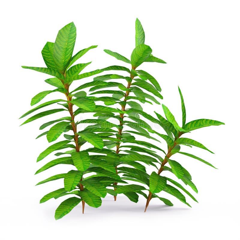 Egzotyczna roślina ilustracji