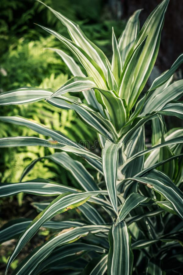 Egzotyczna roślina, zamyka w górę strzału w szklarni obrazy royalty free