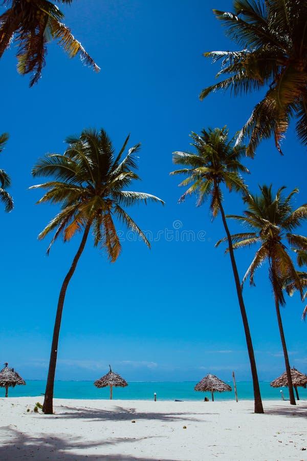 Egzotyczna whitesand plaża z błękitnym morzem palmami i, loungues obrazy stock