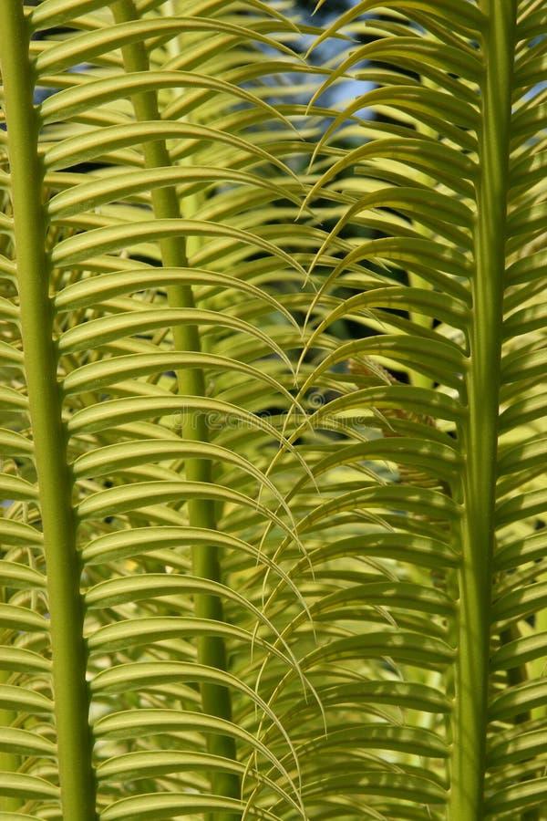 egzotyczne krzewów tropikalny Fidżi zdjęcie royalty free