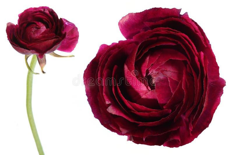 egzotyczne kwiat zdjęcie royalty free