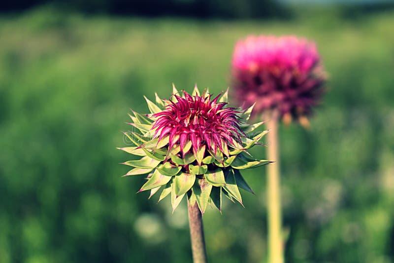 egzotyczne kwiat zdjęcia royalty free