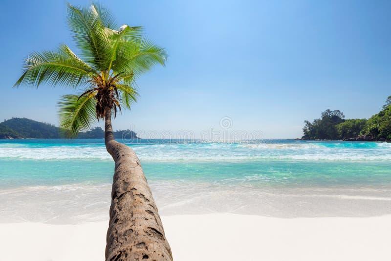 egzotyczne na pla?y Kokosowy drzewko palmowe na tropikalnym pla?y i turkusu morzu na wakacje wyspie obrazy royalty free