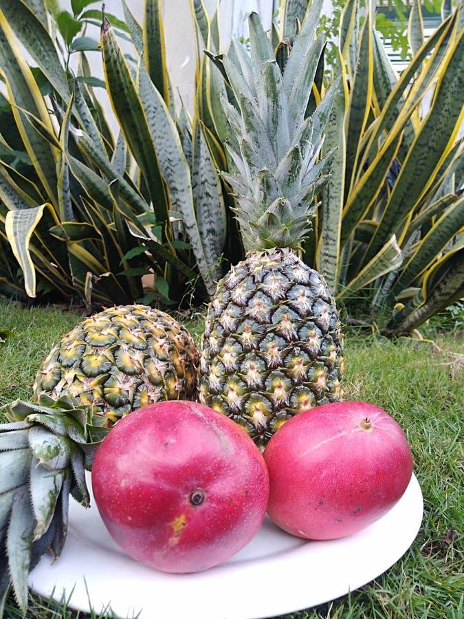 egzotyczne owoce fotografia stock
