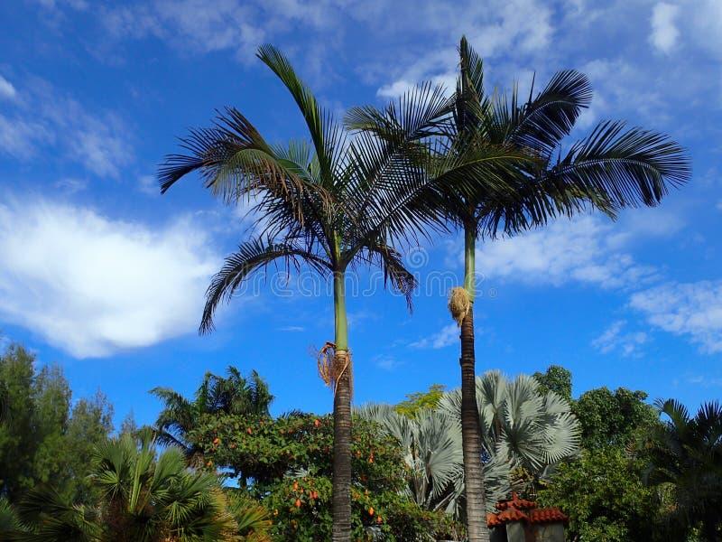Egzotyczne palmy na niebie w ciepły letni dzień fotografia stock