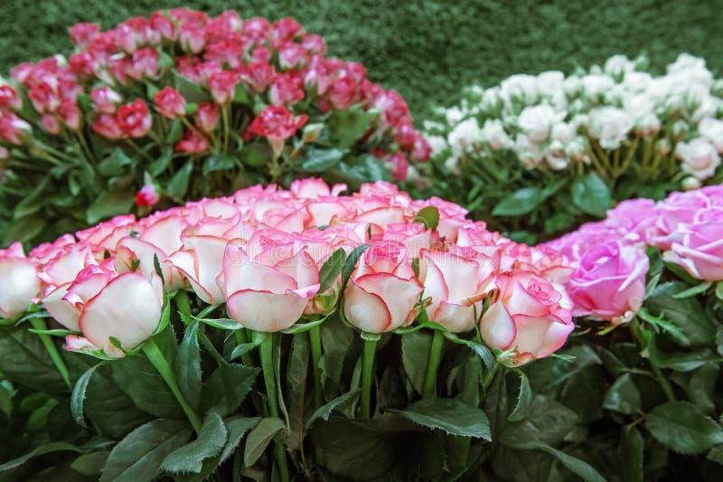 Egzotyczne róże od lilego elity nowożytnych rozmaitość w bukiecie jako prezent Tło Selekcyjna ostrość zdjęcie stock