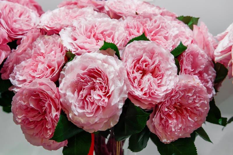 Egzotyczne róże różowe nowożytne elita rozmaitość w bukiecie jako prezent Tło obraz stock