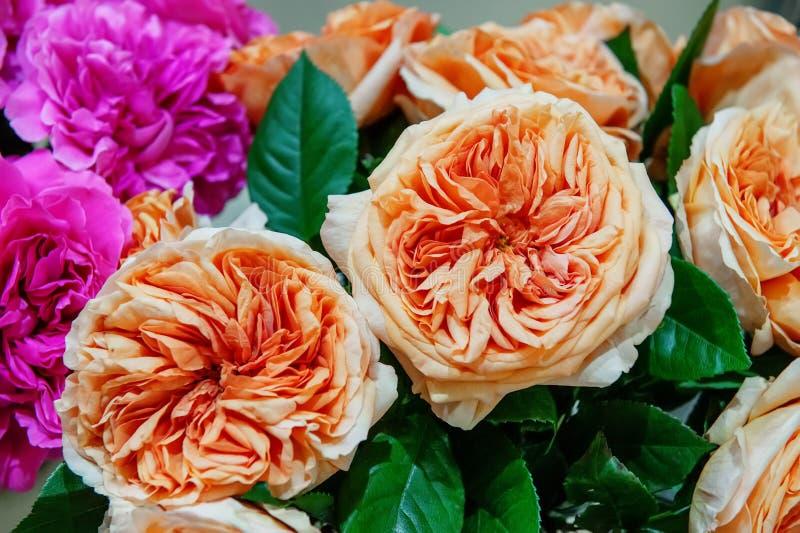 Egzotyczne róże różowe nowożytne elita rozmaitość w bukiecie jako prezent Tło Selekcyjna ostrość zdjęcia stock