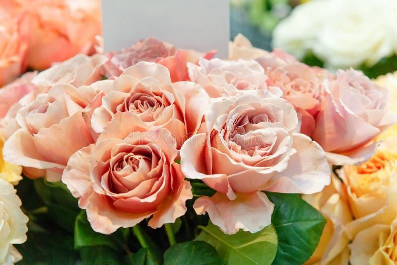 Egzotyczne róże różowe nowożytne elita rozmaitość w bukiecie jako prezent Tło Selekcyjna ostrość zdjęcia royalty free