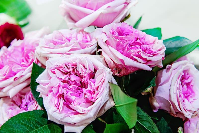 Egzotyczne róże różowe nowożytne elita rozmaitość w bukiecie jako prezent Tło Selekcyjna ostrość obrazy royalty free