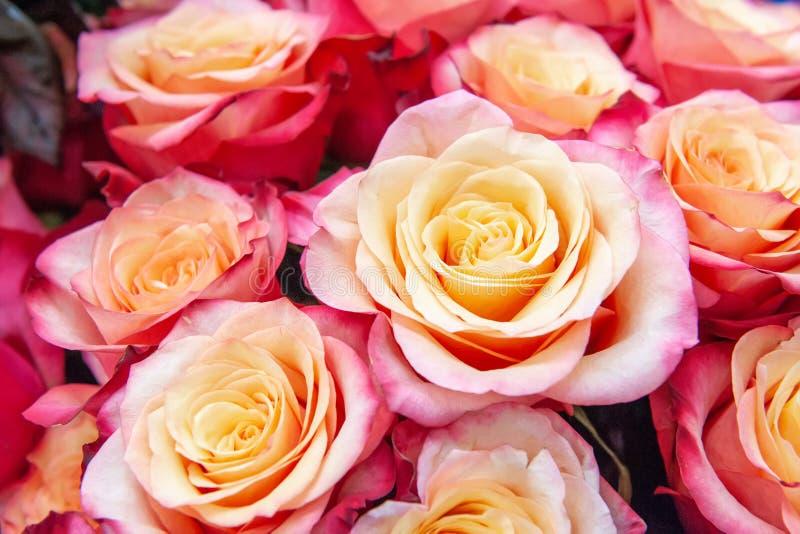 Egzotyczne róże różowe nowożytne elita rozmaitość w bukiecie jako prezent Tło Selekcyjna ostrość zdjęcie royalty free