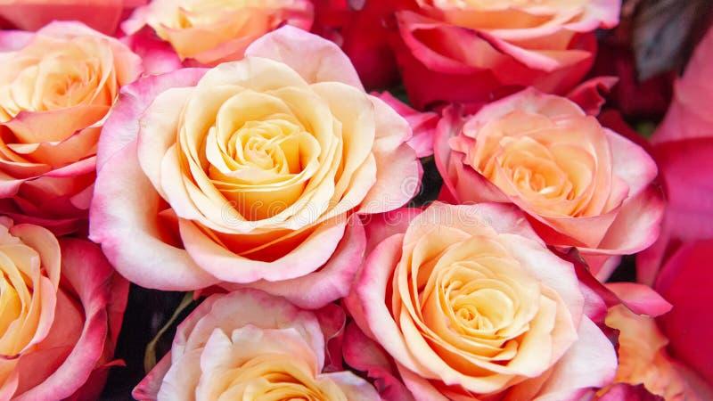 Egzotyczne róże różowe nowożytne elita rozmaitość w bukiecie jako prezent Tło Selekcyjna ostrość tła kwiatów ogrodowe floksów roś zdjęcia royalty free