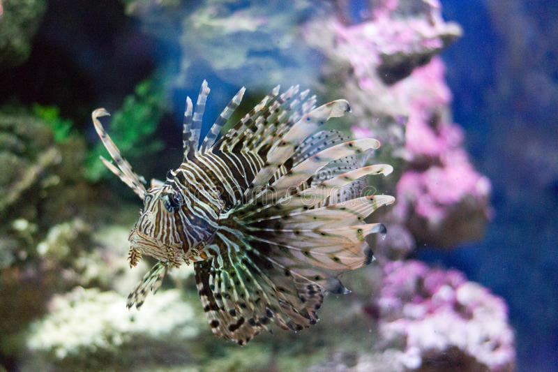 egzotyczne ryby obrazy stock