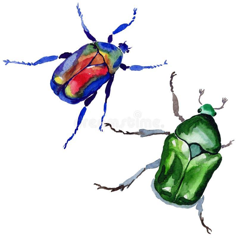 Egzotycznego ścigi bronzovka dziki insekt w akwarela stylu odizolowywającym royalty ilustracja