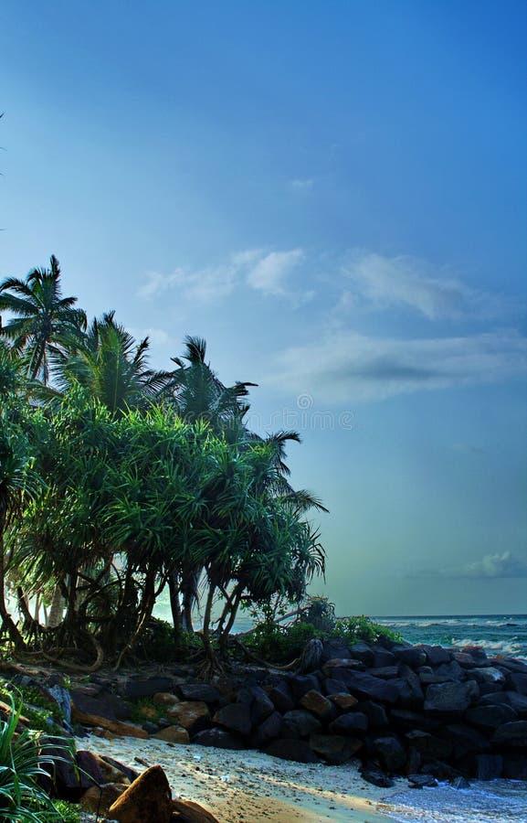 Egzotycznego zwrotnika denny brzeg z palmą w Sri Lanka obrazy stock
