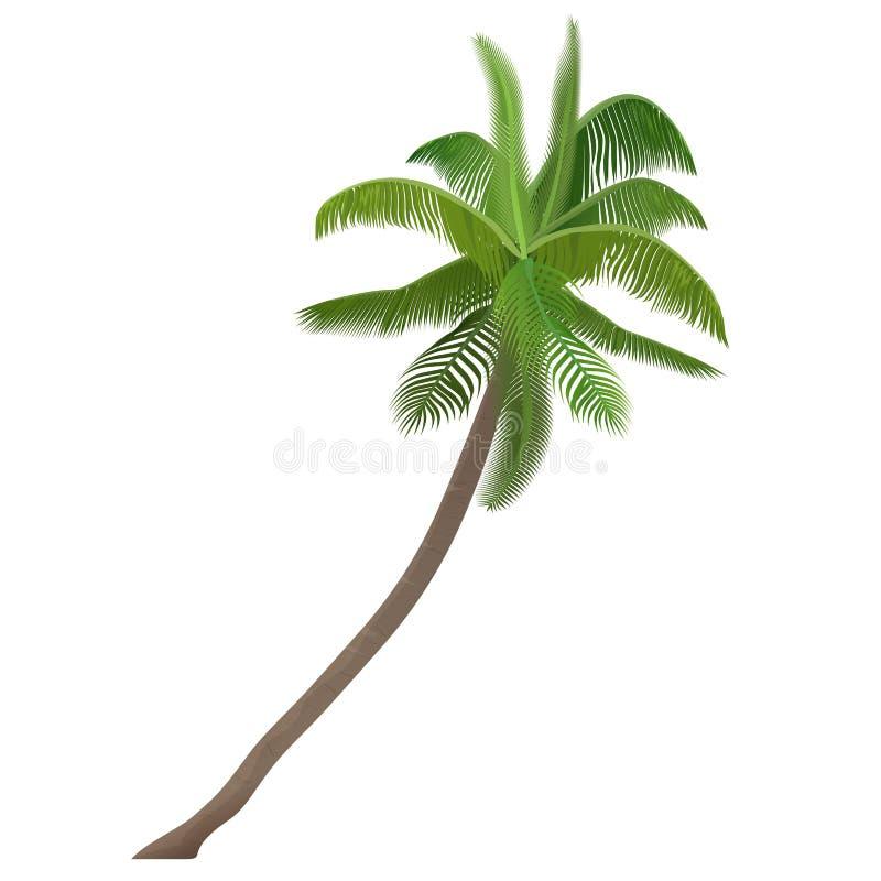 Egzotycznej tropikalnej Coco dokrętki wektorowa wysokość wyszczególniał drzewka palmowego ilustracja wektor