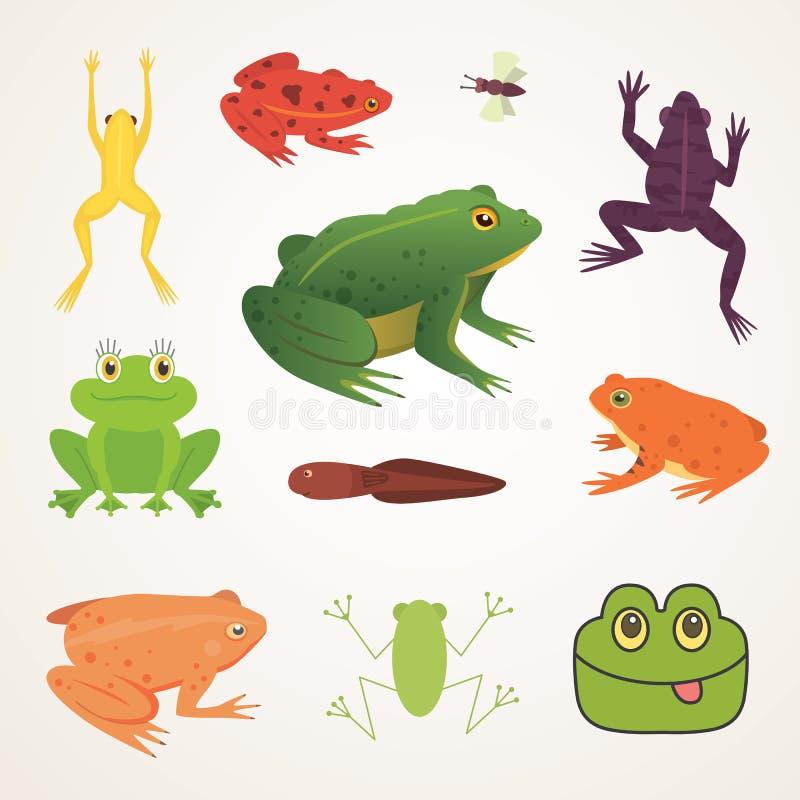 Egzotyczny amfibia set Żaby w różnej styl kreskówki Wektorowej ilustraci odizolowywającej Tropikalni zwierzęta royalty ilustracja