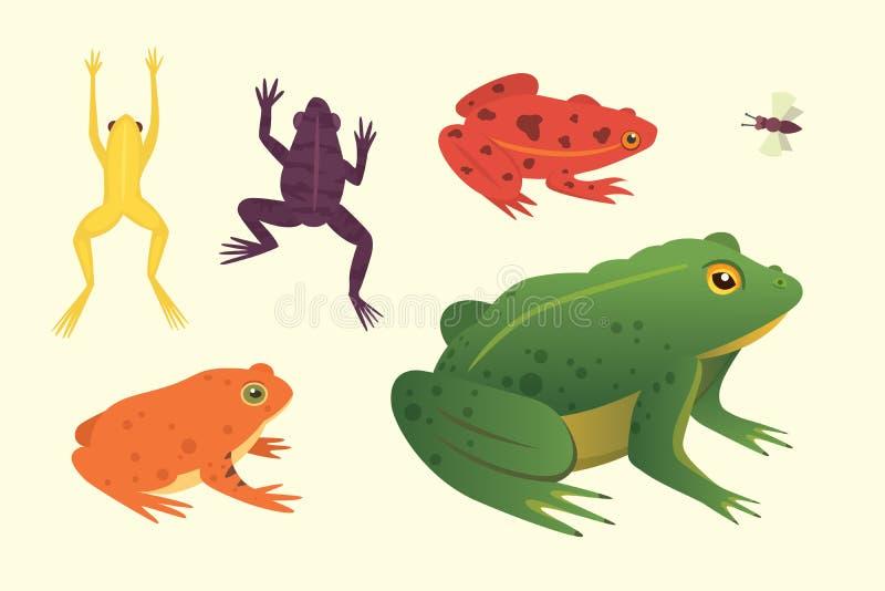 Egzotyczny amfibia set Żaby w różnej styl kreskówki Wektorowej ilustraci odizolowywającej Tropikalni zwierzęta ilustracji