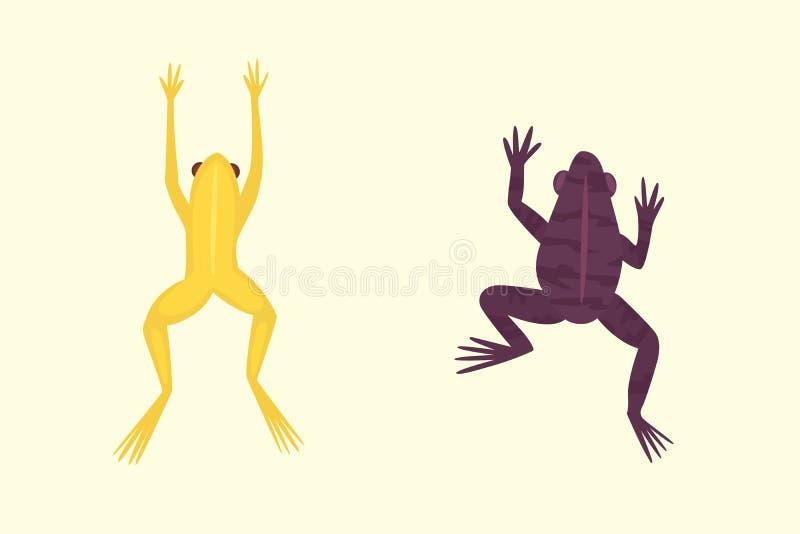 Egzotyczny amfibia set Żaby w różnych stylach ilustracja wektor