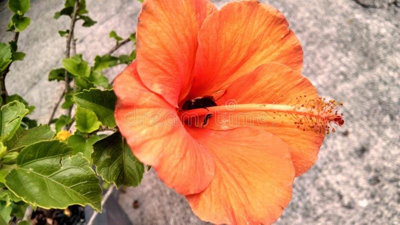 Egzotyczny kwiat z pszczołą zdjęcia stock