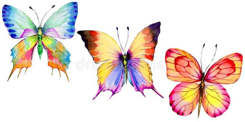 Egzotyczny motyli dziki insekt w akwarela stylu odizolowywającym ilustracji