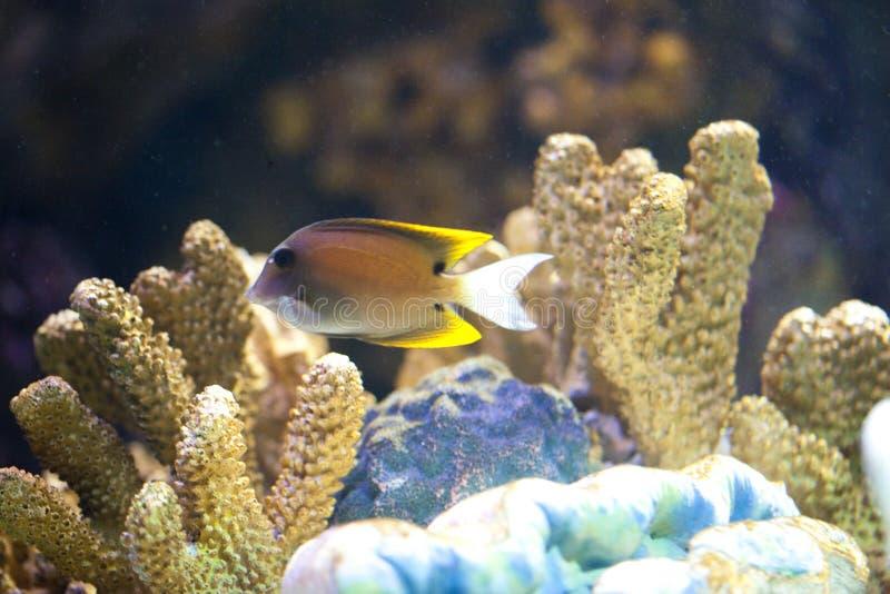 egzotyczny rybi zbiornik obrazy royalty free