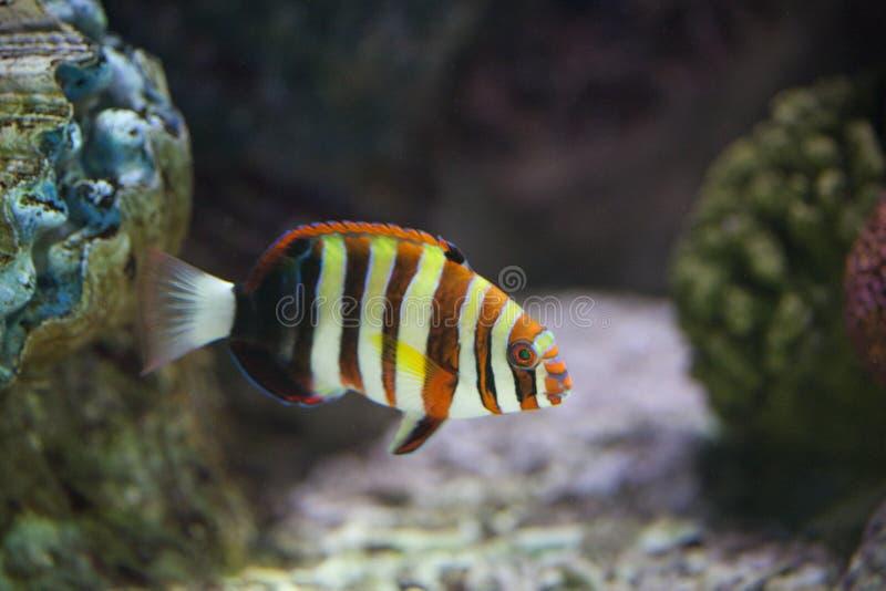 egzotyczny rybi zbiornik obraz stock