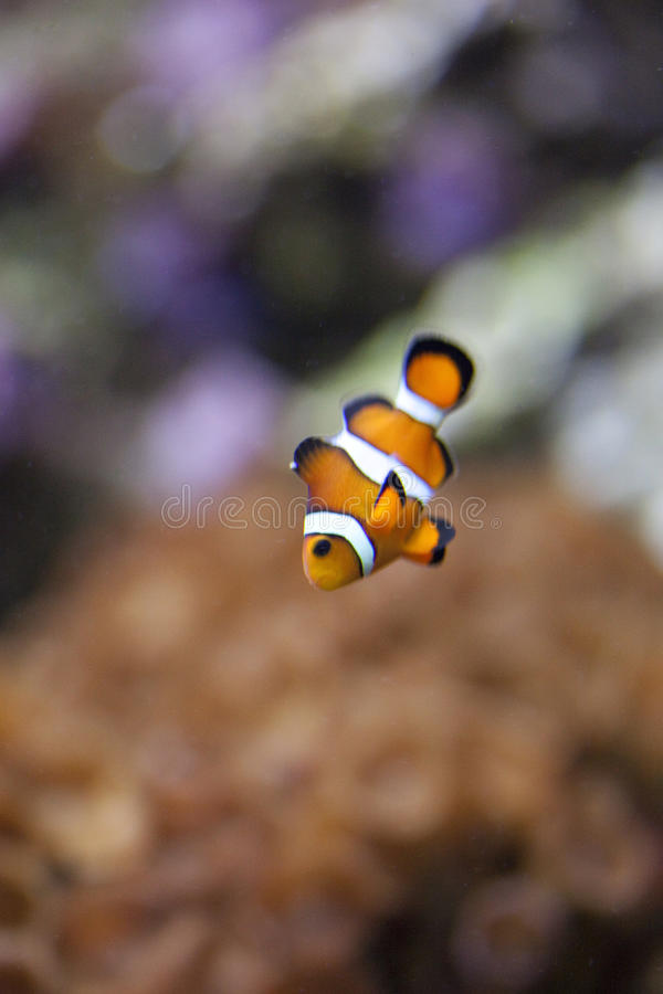 egzotyczny rybi zbiornik zdjęcie stock