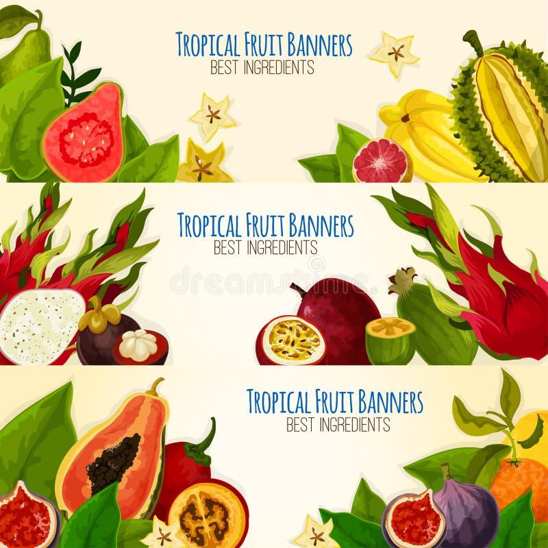 Egzotyczny tropikalnej owoc sztandar ustawiający dla karmowego projekta ilustracji