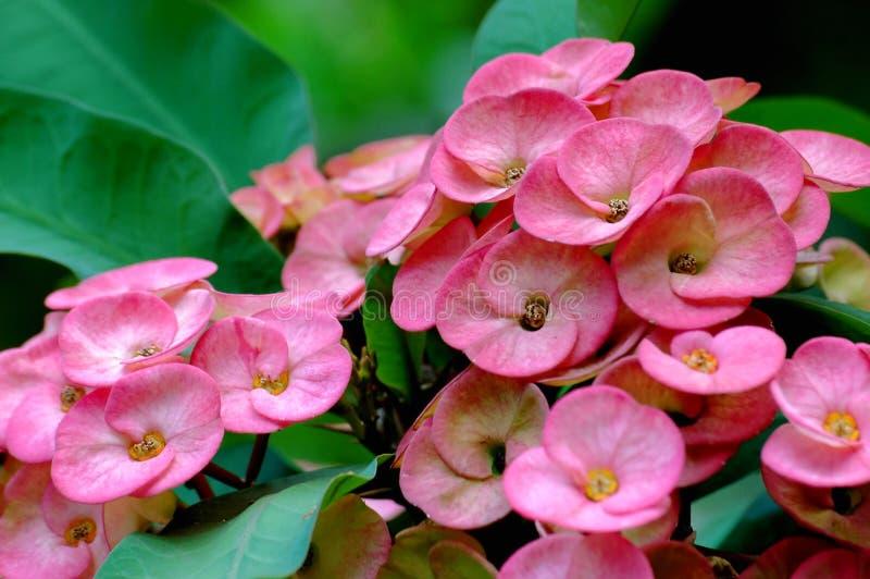 egzotycznych kwiatów fotografia stock