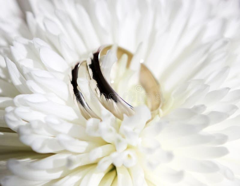 Eheringe auf weißer Chrysanthemenblume, Blumengesteck der Hochzeit stockbild