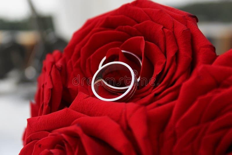 Eheringe in Rad Rose lizenzfreies stockfoto