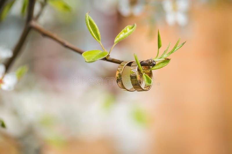 Eheringnahaufnahme mit Kirschblumen stockfoto