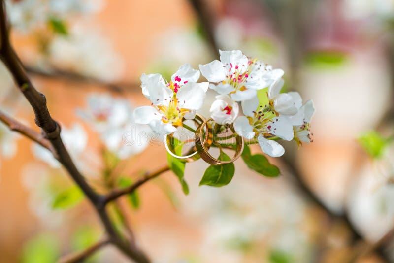 Eheringnahaufnahme mit Kirschblumen stockfotos