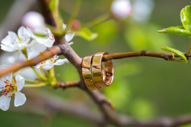 Eheringnahaufnahme mit Kirschblumen stockbilder