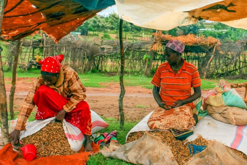 Ehiopian Market stock images