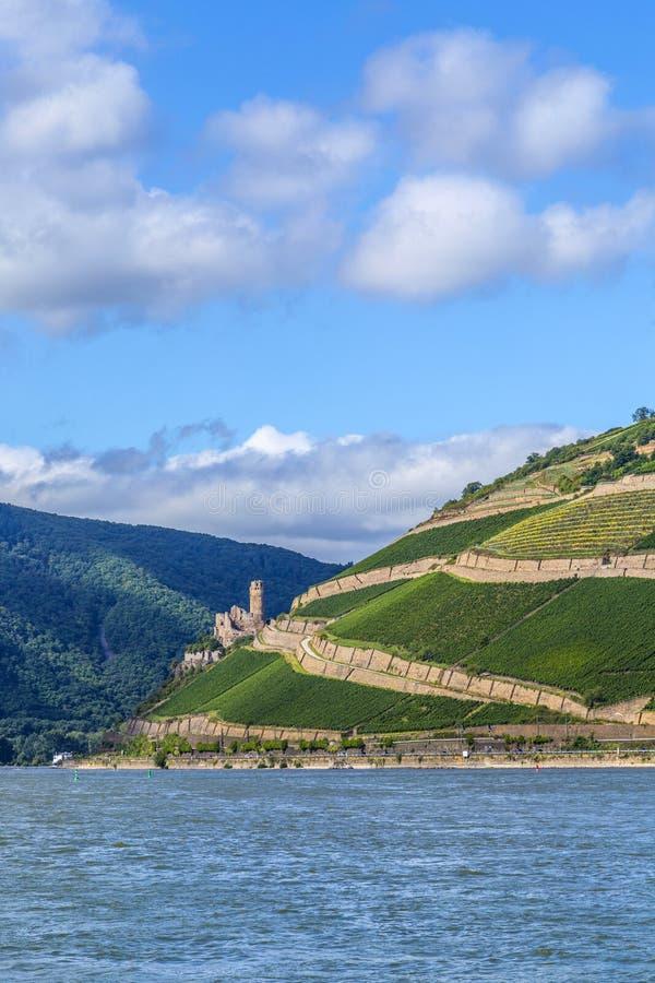 Ehrenfels城堡在葡萄园里 图库摄影