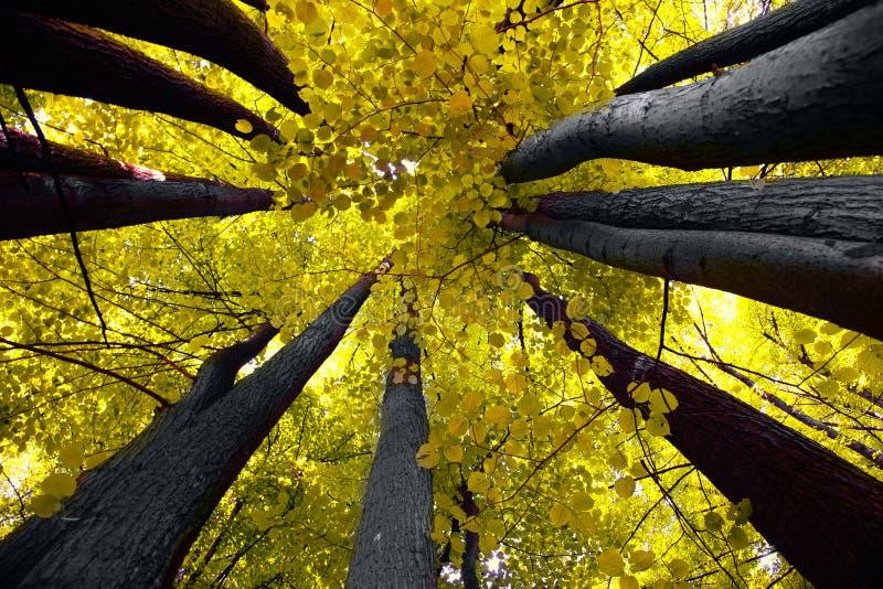 Ehrfürchtige Bäume lizenzfreie stockbilder