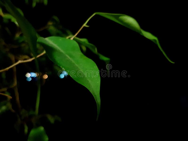 Ehrfürchtige Nachtnatur Qhd stockbilder