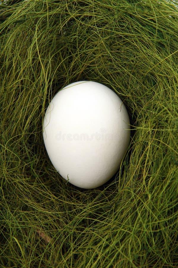 Ei in een nest stock foto