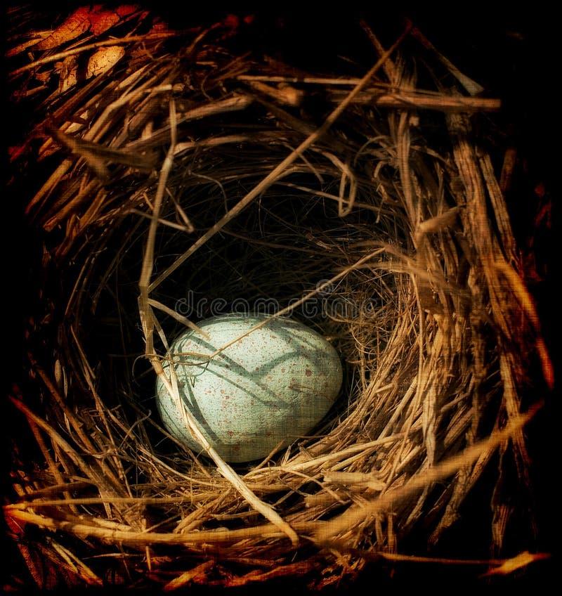 Ei in einem Nest lizenzfreies stockfoto
