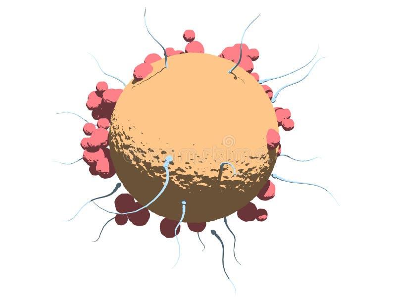 Ei en sperma stock illustratie