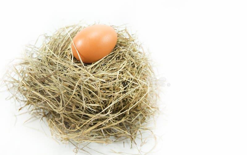 Ei in het nest royalty-vrije stock afbeeldingen