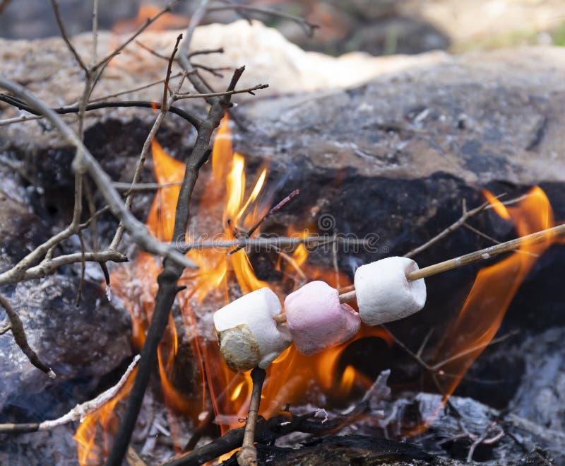Eibische karamellisiert auf einem Lagerfeuer lizenzfreie stockfotografie