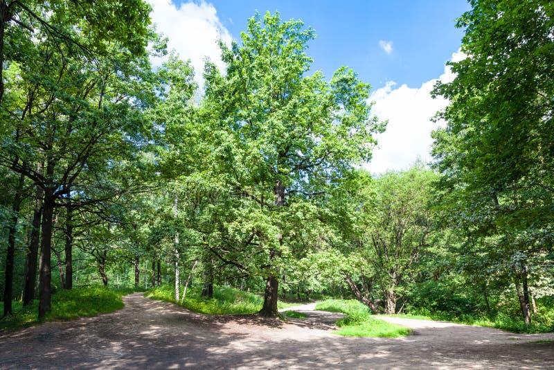 Eiche auf Waldlichtung am sonnigen Sommertag stockbild