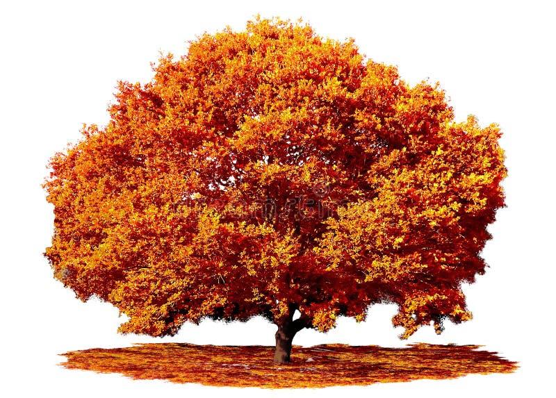 Eiche in Fall Herbst lizenzfreie stockfotografie
